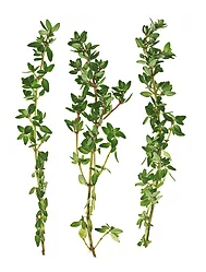A Simple Thyme